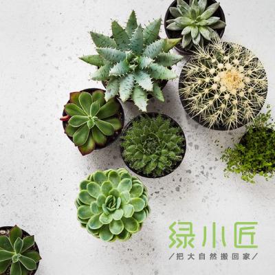 绿小匠家庭盆栽品牌